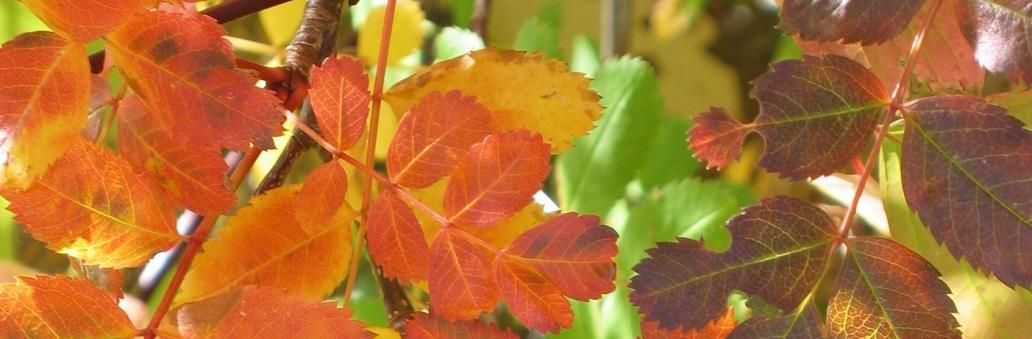 Fall Leaves 1032x338